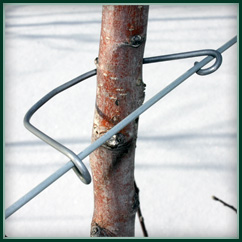 U-Hook Tree Holder